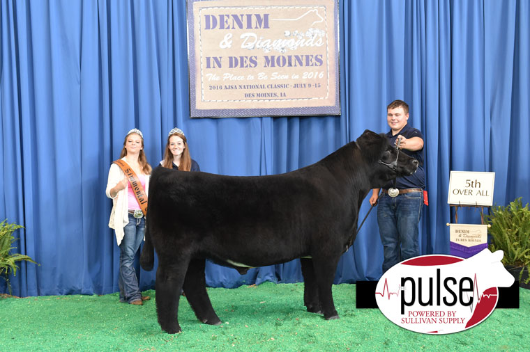 2016-AJSA-5th-Overall-Steer-exhibited-by-Kyle-Andrews-PPW9704