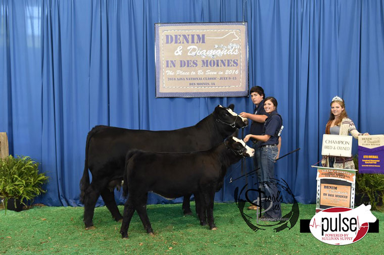 2016-AJSA-8th-Overall-Champion-Bred_Owned-Purebred-Cow-Calf-Pair-exhibited-by-Will-Heavner-PPW5177