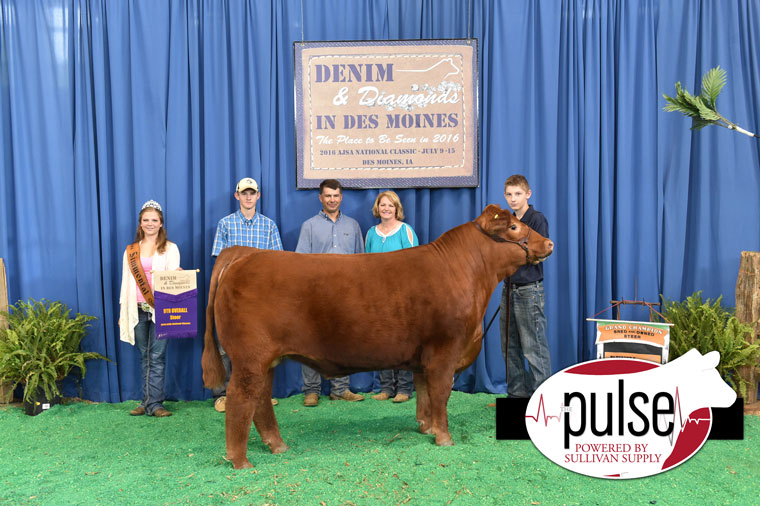 2016-AJSA-Champion-Bred_Owned-Steer_-9th-Overall-Steer-exhbited-by-Garrett-Walther-PPW9861