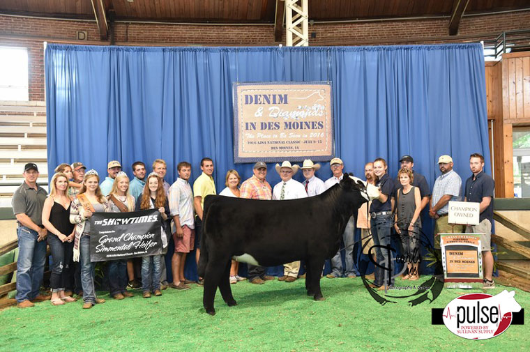 2016-AJSA-Grand-Champion-Owned-Purebred-Heifer_-Champion-Division-4-exhibited-by-Sara-Sullivan-PPW8454