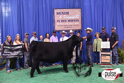 2016-AJSA-Reserve-Grand-Champion-Owned-Percentage-Heifer_-Champion-Division-6-exhibited-by-Sam-Wallace-PPW4025