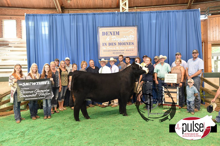 2016-AJSA-Reserve-Grand-Champion-Owned-Purebred-Heifer_-Champion-Division-6-exhibited-by-Kiersten-Jass-PPW8494