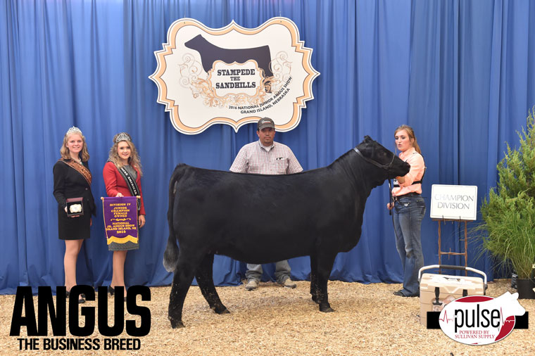 2016-NJAS-Champion-Owned-Heifer-Junior-4-Division_Class-34-exhibited-by-Shayne-Myers-PPW8830