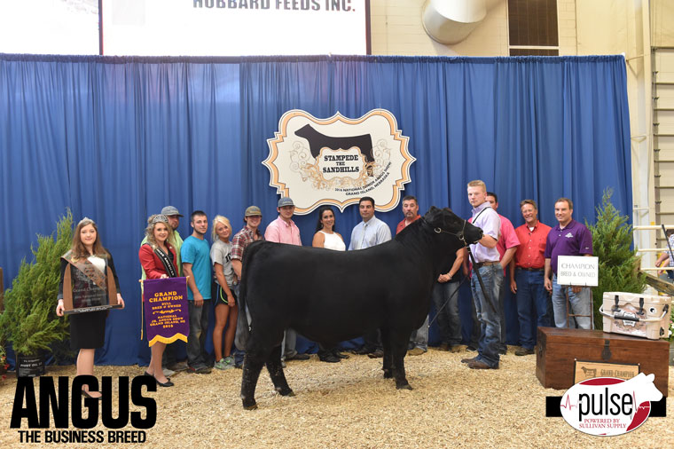 2016-NJAS-Grand-Champion-Bred_Owned-Bull_-Champ-Intermediate_-Class-6-exhibited-by-Cade-Stertzbach-PPW4218