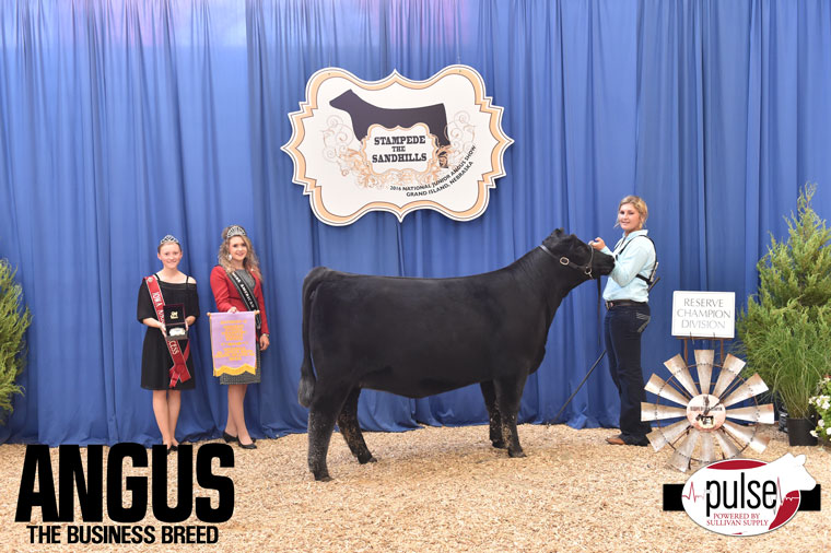 2016-NJAS-Res-Champ-Owned-Heifer-Junior-2-Division_Class-26-exhibited-by-Codee-Schlipf-PPW8216