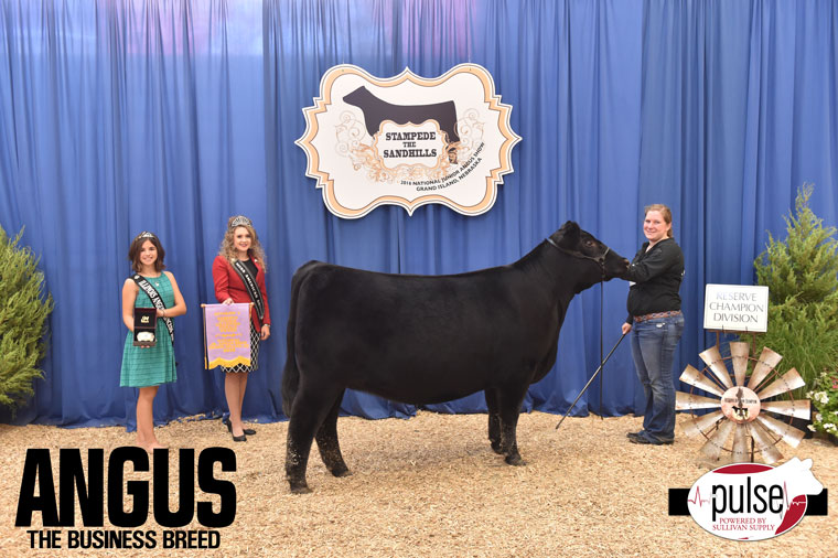 2016-NJAS-Res-Champ-Owned-Heifer-Junior-5-Division_-Class-40-exhibited-by-Maddy-Udell-PPW0295