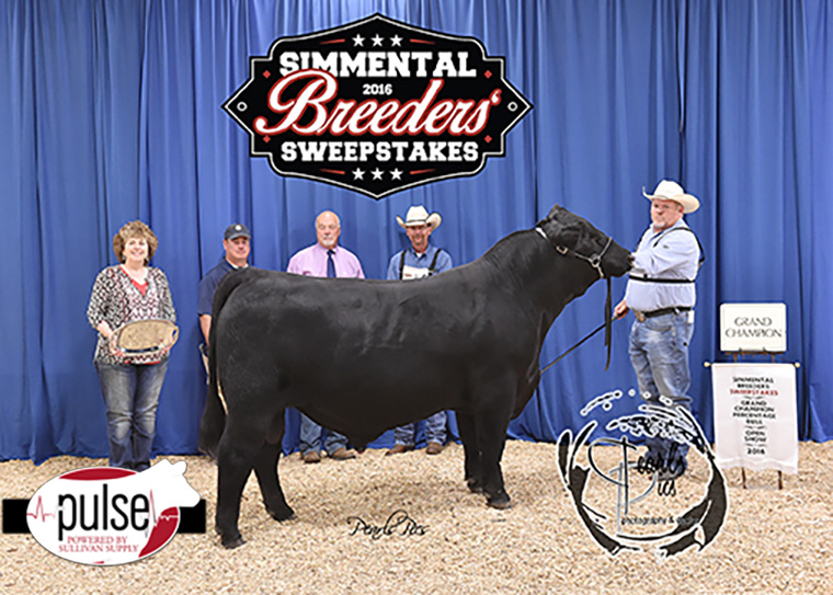 2016 SBS Grand Champion Percentage Bull-Griswold -Circle M Farms PPW_3988 copy