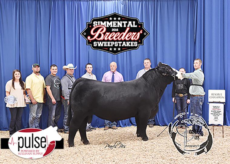 2016 SBS Reserve Champion Percentage Bull-Prestige Cattle Co PPW_4011 copy