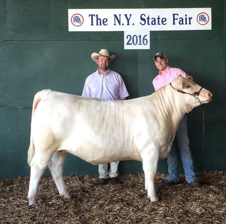 NY 1 Rot Reserve Supreme Heifer