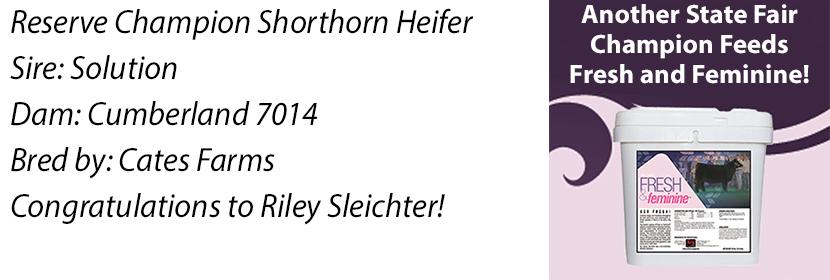 ks-res-shorthorn-heifer-ff