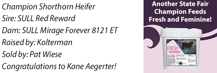 NE Shorthorn Heifer FF