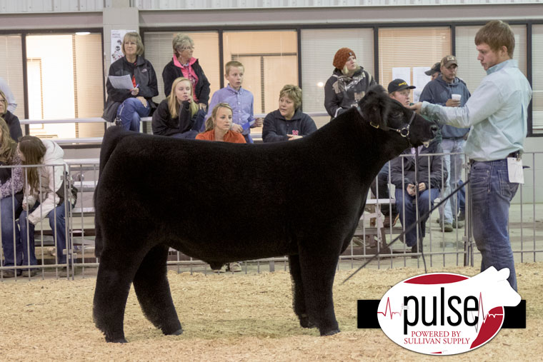 1ch_norfolk16_overall-steer_aw2a7723