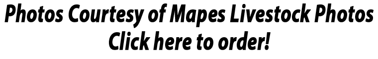 mapes-photo-ad