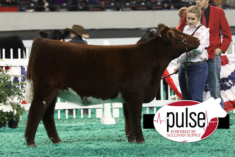 res_div_iii_shorthorn_img_0121