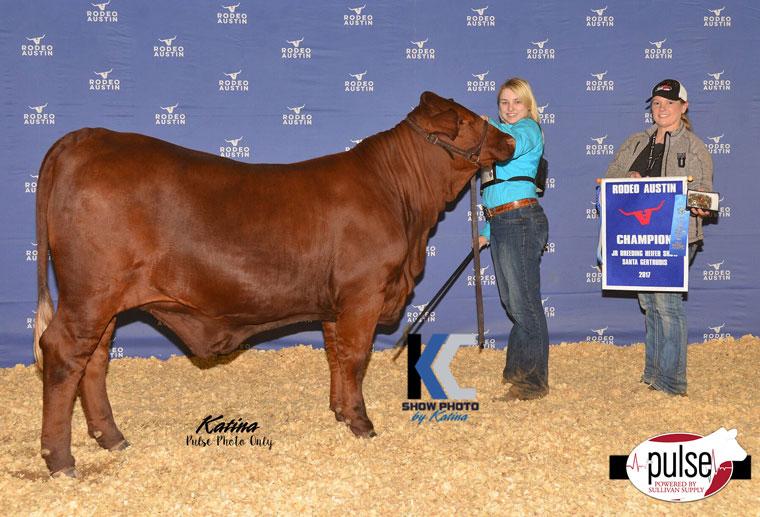 Rodeo Austin Jr Santa Gertrudis Heifers Champions