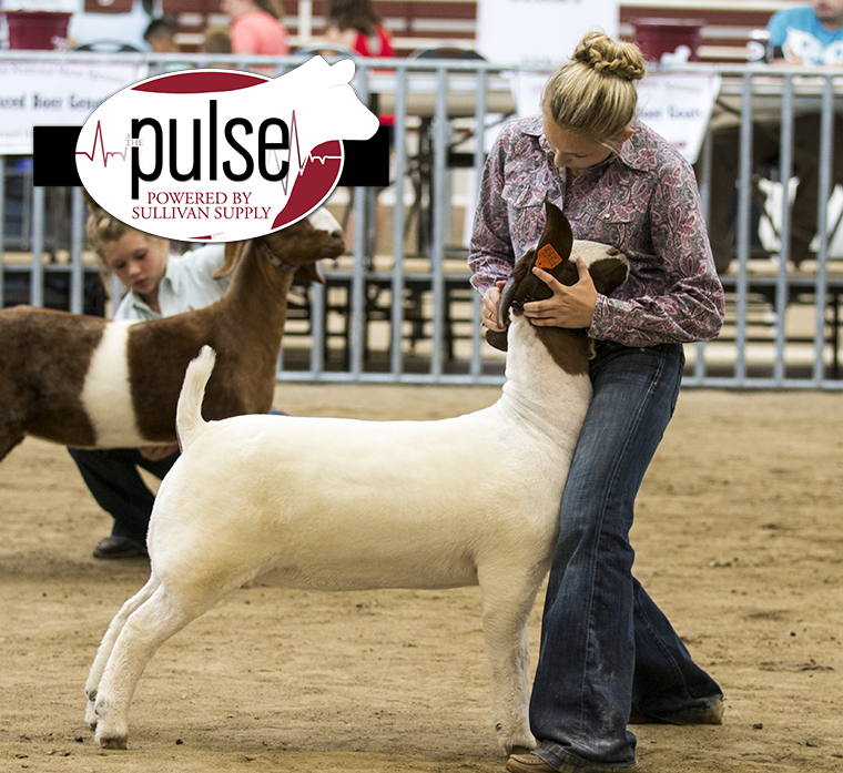 National JABGA Show | Overall Commercial Does | The Pulse