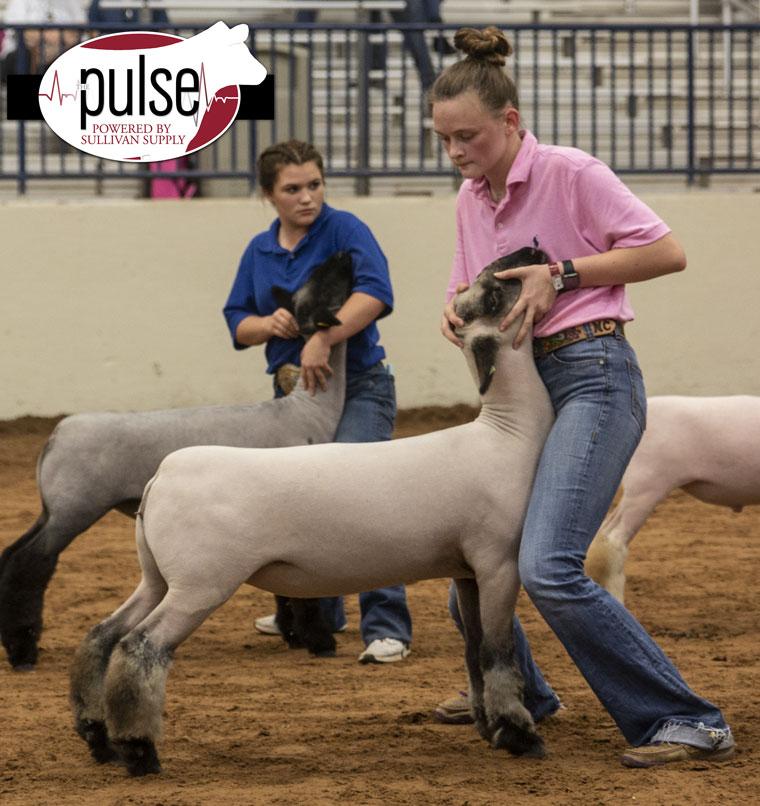 Heart of Texas Fair | Jackpot Lambs | The Pulse