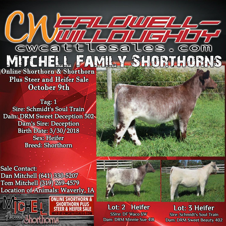 Mitchell Family Shorthorns Online Shorthorn & Shorthorn Plus Steer