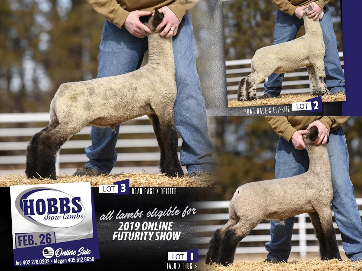Hobbs Show Lambs – Feb 26th Online Sale @ SC Online Sales