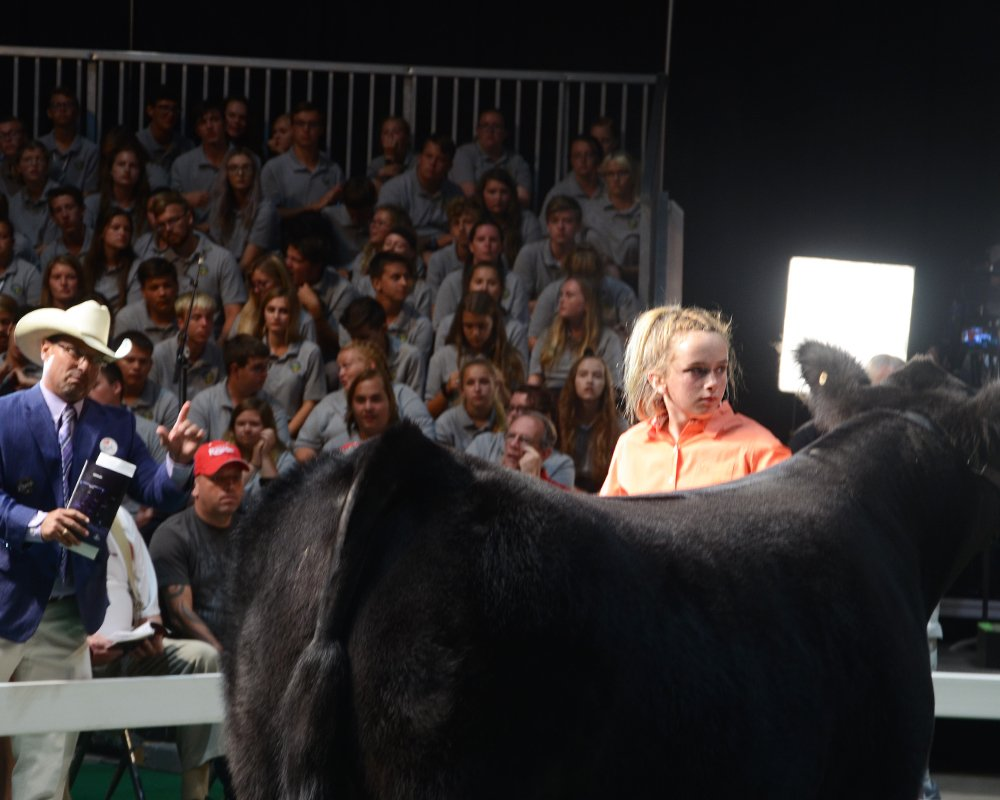 Ohio State Fair | Sale of Champions Results | The Pulse